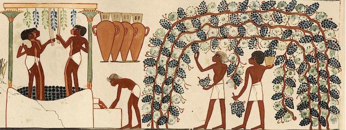 history_of_wine